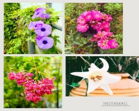 溫室外的花朵